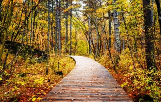 Photo of a Fall Boardwalk at the Squam Lakes Natural Science Center.