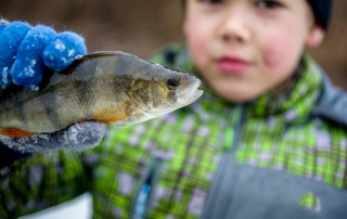 A young angler holds up a yellow perch caught at the Great Meredith Rotary Fishing Derby.